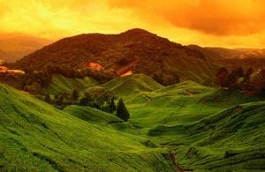 cameron-highlands